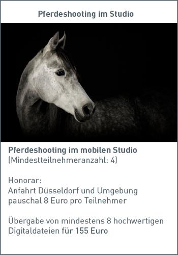 günstige Pferdefotos