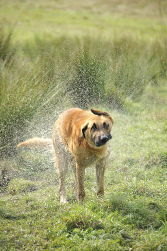 Hundephotographie